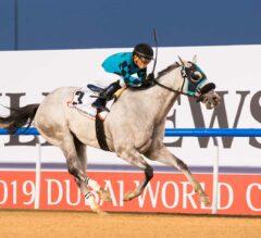 X Y Jet Finally Triumphs In Dubai Golden Shaheen