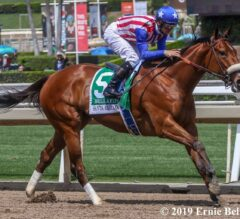 Racing Dudes 2020 Carousel Stakes Wagering Guide and Picks Presale
