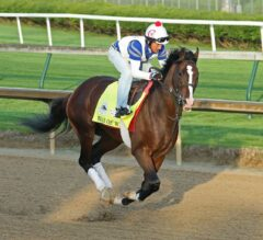 Preakness Stakes Preview: The Madness Continues in Baltimore
