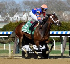 Black-Eyed Susan Preview: Competitive Field Creates Solid Betting Opportunity