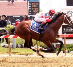 King for a Day Crowned Sir Barton Champ