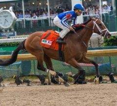 Indiana Derby Preview: Mr. Money Goes for Three Straight