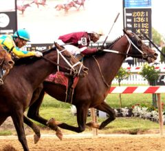 Pimlico Special Preview: Defending Champ Tenfold Returns
