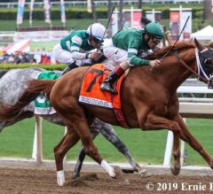 Vino Rosso Proves Better With Age in Gold Cup