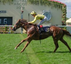 Cape Byron Conquers Crowded Wokingham