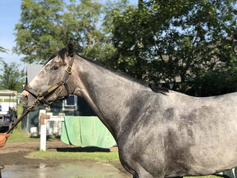Tacitus Tops Belmont Park Worktab