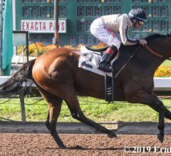 Marley's Freedom Causes No Worries in Great Lady M Triumph