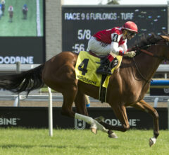 Royal North, Trillium Co-Featured for Woodbine Saturday