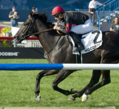 Silent Poet Rewrites the Record Books in the Grade 2 Play the King Stakes