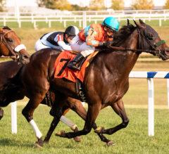 Goldwood Runs Win Streak to Five in $100,000 Sensible Lady