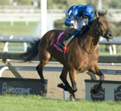 Old Persian Routs New Territory in Northern Dancer