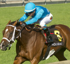 Woodbine Mile Preview: Starship Jubilee Set to Face the Boys