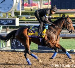 14 Trends You Must Know for the Breeders' Cup
