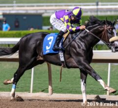 Kentucky Derby Contenders Pedigree Analysis: Honor A. P.