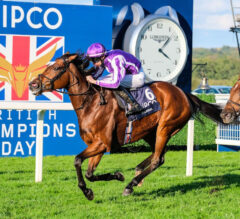 Magical Sets Aim at Sistercharlie in Breeders' Cup After Champion Stakes Win