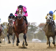 Racing Dudes Cigar Mile Handicap Wagering Guide and Picks Released