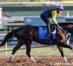 Star-Studded Lineup Pre-Entered for Breeders' Cup Sprint