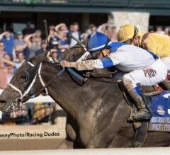 Spiced Perfection Splits Foes to Win TCA