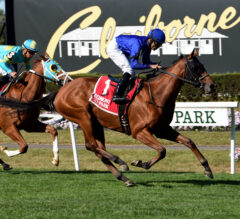 Alms Flies Home in Matron