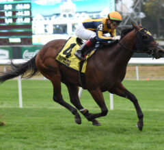 Full Field Ready to Fly in Juvenile Turf Sprint