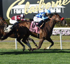 Neptune's Storm All Heart in Hill Prince