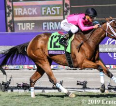 Brilliant Performance by Belvoir Bay in the Turf Sprint