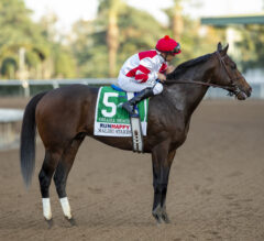 Mandela 'Expecting Something Big' from Omaha Beach in Pegasus World Cup