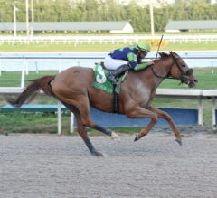 Racing Dudes Three Stars of the Week: War Story Upsets at Gulfstream Park