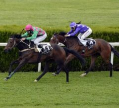 What to Look for in Top Horse Racing Betting Sites