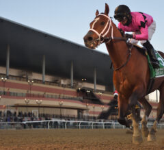 Maximum Security Too Tough in Cigar Mile