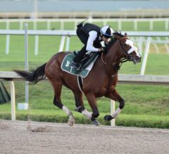 Holy Bull Preview: Tiz the Law Eyes Redemption