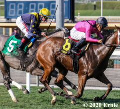 Honeymoon Preview: Laura's Light Back on Turf, Ready to Run
