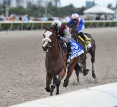 Tiz the Law Leads Field of 12 in Saturday's Curlin Florida Derby