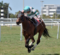 Highland Glory Nips Cheermeister in Sanibel Island