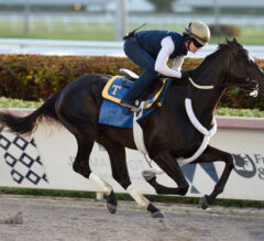 Independence Hall, Tiz the Law Put in Final Works for Florida Derby