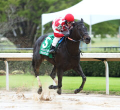 Serengeti Empress Romps in Azeri