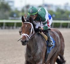 Kentucky Derby Contenders Pedigree Analysis: Dr Post