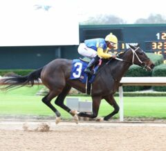 Fantasy Stakes Contender Spotlight: Fire Coral