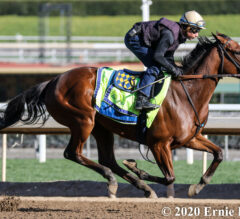 Merneith Takes Third Stab at Breaking Maiden