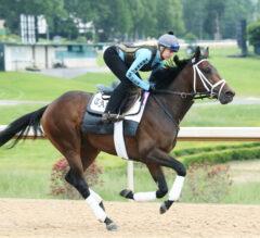 Three Underneath Belmont Stakes Picks