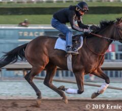 Winning Colors Preview: Spiced Perfection Debuts for New Connections