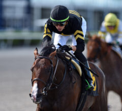 Easy Goer Preview: Undefeated Casino Grande Takes Next Step