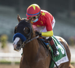 Improbable Dominates Hollywood Gold Cup