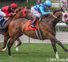 San Francisco Mile Preview: Neptune's Storm Tops Season-Ending Stakes