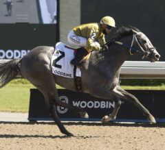 Gold Fever Preview: Newstome Aims for Fourth Stakes Score