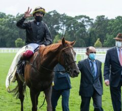 Stradivarius Stamps Himself World's Best Stayer in Gold Cup