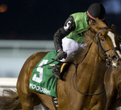 Woodbine Oaks Preview: Curlin's Voyage Ready to Set Sail