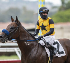 Galilean Passes Turf Test in California Dreamin'