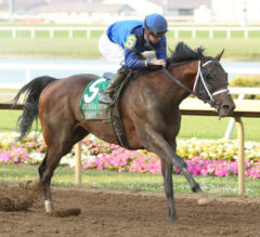 Oklahoma Derby Preview: Shippers Invade Sooner State