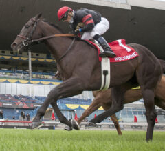 Silent Poet Still Perfect in 2020 After Connaught Cup
